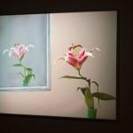 Vystavy2009_Lcisarova__002